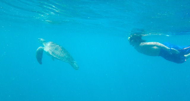 Snorkelling with Turtles in St Maarten, Dutch/French Virgin Islands